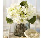 white-hydrangea-arrangement-in-glass-vase-c