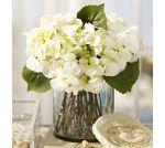 white-hydrangea-arrangement-in-glass-vase-c